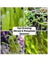 Fast Growing Nitrate & Phosphate Remover Algae-Pack