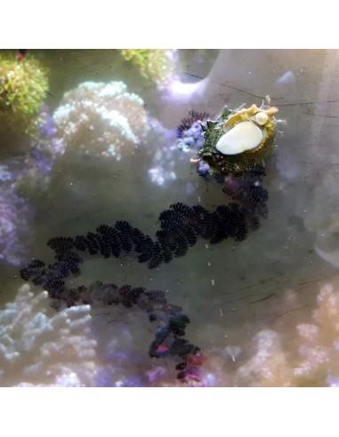 Film Algae Green Marine Micro Algae