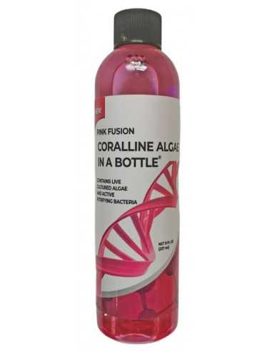 Pink Fusion Coralline Algae In A Bottle