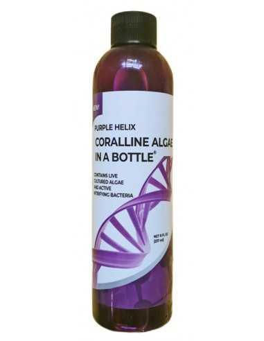 Purple Helix Coralline Algae In A Bottle