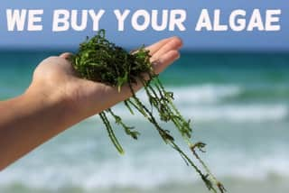 https://www.livealgae.co.uk/modules/iqithtmlandbanners/uploads/images/5f8821e55b7bc.jpg